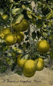 FL - Grapefruit