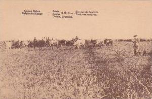 Belgian Congo Elevage de Bovides