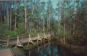 Georgia Waycross Okefenokee Swamp Park