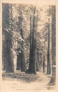 LPS37 Seattle Washington Trees Lane Crescent Tavern Postcard RPPC