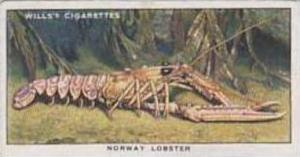 Wills Vintage Cigarette Card The Sea-Shore No 24 Norway Lobster  1938