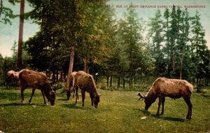 Washington Tacoma Elk At Point Defiance Park