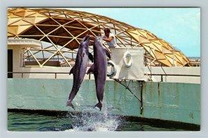 St Petersburg FL- Florida, Porpoise Delights an Audience, Chrome Postcard