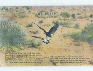 Linen BIRD SITTING ON SKULL IN THE DESERT Postmarked Gainesville Texas TX AD6606