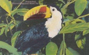 TOUCAN Bird , 1930-40s