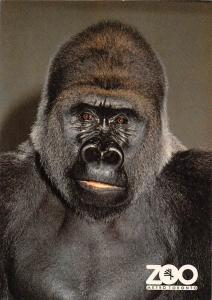 Metro Toronto Zoo, Lowland Gorillas, Wild Animals, Fauna