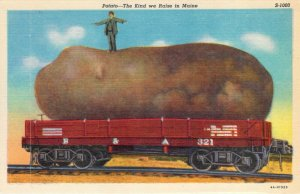 Potato The Kind We Raise in Maine Exaggerated on Rail Car Curteich Postcard NOS