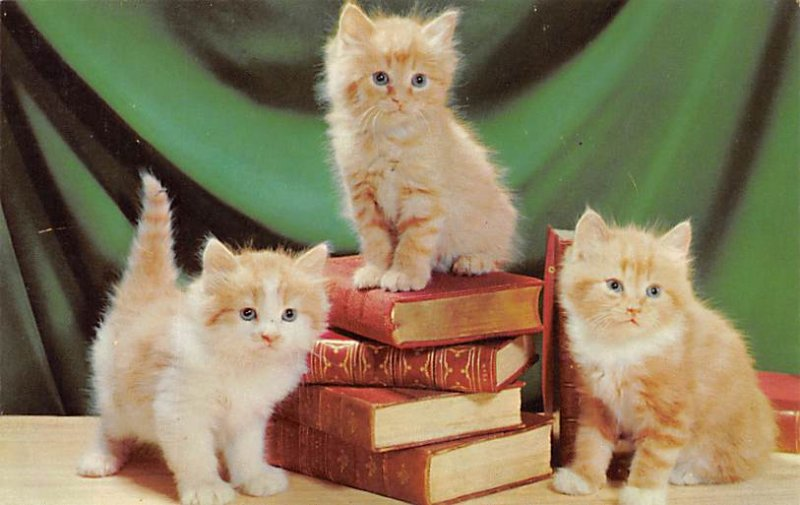 Cat Post Card Kittens and Books Unused