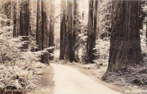 California Redwoods Highway Real Photo