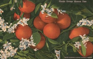 Vintage Postcard 1957 Citrus Fruit Flower Orange Blossom Time Florida FL