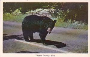 Copper Country Bear Keweenawland Michigan