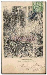 Postcard Old Diego Suarez Foret De La Montagne d & # 39Ambu Madagascar