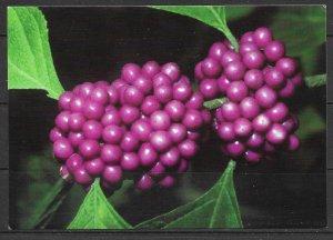 Arkansas - Garvan Woodland Gardens - Berry Bush - [AR-015]