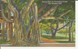 St. Petersburg,Florida,The Sunshine City, Banyan Tree