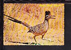 Desert Road Runner Postcard
