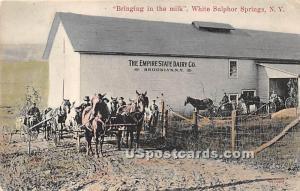 Bringing in the Milk White Sulphur Springs NY 1910
