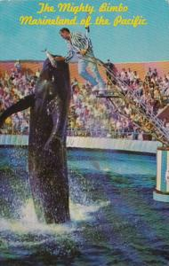 California Marineland Of The Pacific Bimbo The Whale