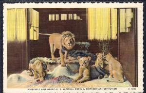 Roosevelt Lion Group,Smithsonian Institution,Washington,DC