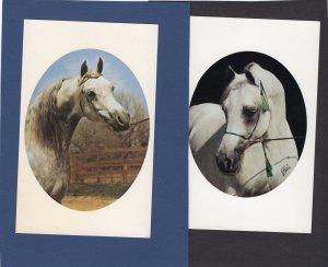 Ibn Raffon Arabian Stallion Vintage Postcards Full-Color Head Study