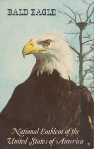 Birds The Bald Eagle