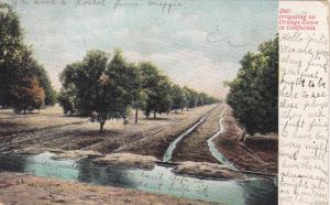 Irrigating an Orange Grove in California, PU-1907