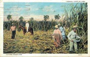 Cuba Havana Corte de Cana Cutting Sugar Cane 05.91
