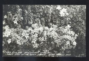 RPPC MOBILE ALABAMA ALALEA PLANT BELLINGRATH GARDENS REAL PHOTO POSTCARD