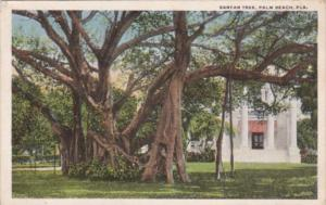 Florida Palm Beach Typical Banyan Tree 1921