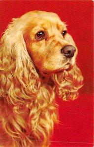 Cocker spaniel Dog Unused