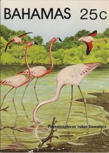 Bahamas Flamingoes - Post Card Set - Mint