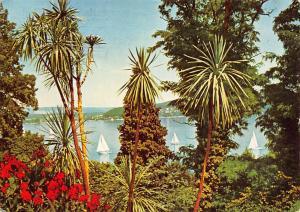 Insel Mainau im Bodensee Dracaenengruppe Lake Boats Flowers
