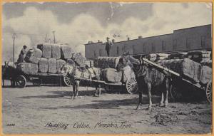 Memphis, Tenn., Handling Cotton, Cotton bales on horse drawn wagons-1908