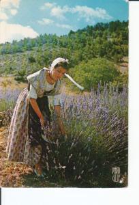 Postal 016862: PROVENCE Reflets de France - Scene de Provence. Cueillette de ...