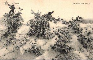 Belgium De Panne La Flore des Dunes 1914