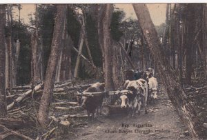 Chaco-Bureyes Clevando madera , Argentina, 00-10s ; Logging