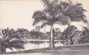 Florida Saint Petersburg Palms Along The Shore Of Mirror Lake