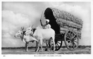 Sri Lanka Ceylon Bullock Cart Colombo Vintage Postcard