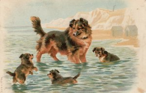 Mama dog and puppies playing in the water, PU-1908