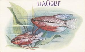 MOSCOW, Russia: 1976; QSL Radio Card, Fish swimming