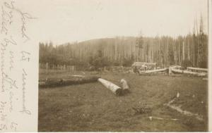 Logs Fallen Trees Forestry Logging WA Washington c1906 Real Photo Postcard E10