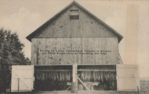 Strung on Laths Connecticut Tobacco is smoked and dried Vintage postcard 1910s
