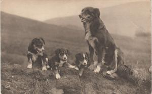RP; Three cute puppies and a momma dog, 1900-10s