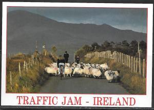 Ireland, Traffic Jam, sheep, bicycle, unused