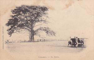 GUINEE Francaise.- Konakry - La Jetee , 00-10s