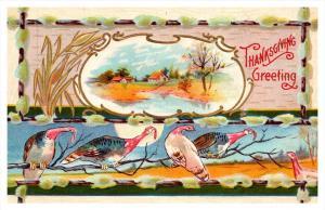 8122 Thanksgiving  Turkeys, homestead