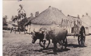 RP: Ox Cart , NICARAGUA , PU-1908