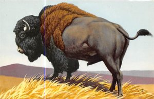 Bison Painted by Don R Eckleberry Buffalo Unused