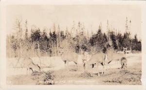Michigan St Ignace Winter Scene Deer Real Photo