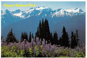 Olympic National Park -