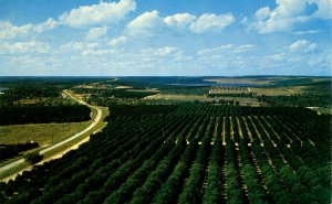 FL - Clermont. Florida Citrus Tower & View of Orange Groves